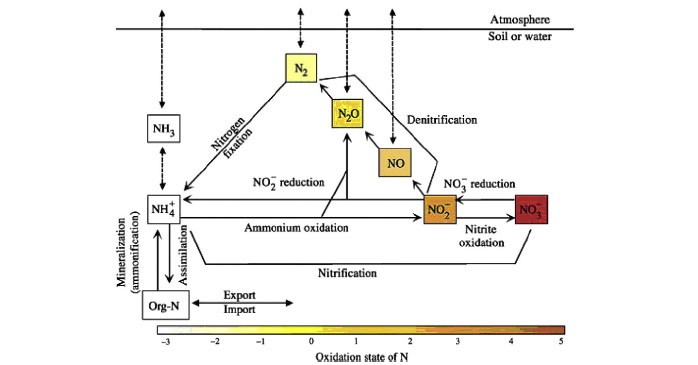 Fig. 2 Main inter-conversion routes for nitrogen (Statham et al. 2011)