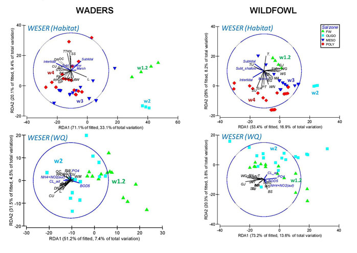 Figure 4.  Multivariate multiple regression (dbRDA) performed on bird assemblage distribution and all environmental variables (full model) in the Weser Estuary.  Vectors indicate the direction of increase in the species density (in black) and the environmental gradients (in blue) and symbols indicate salinity zones.  Sectors are shown as coloured labels in the graph.  A reduced dataset was used for this analysis (e.g. not including sectors in the oligohaline zone) due to limitations in the availability of environmental data.